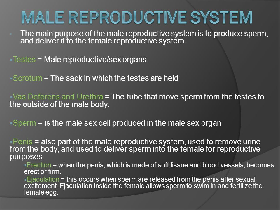 The Main Purpose Of The Male Reproductive System Is To Produce Sperm