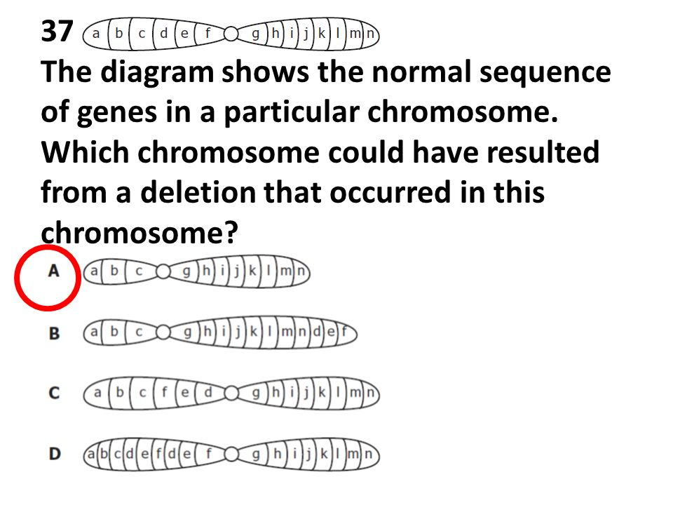 End of course biology spring 2008 released test 1 a student 37 the diagram shows the normal sequence of genes in a particular chromosome 47 38 the diagram shows dna fingerprints from a daughter horse ccuart Gallery