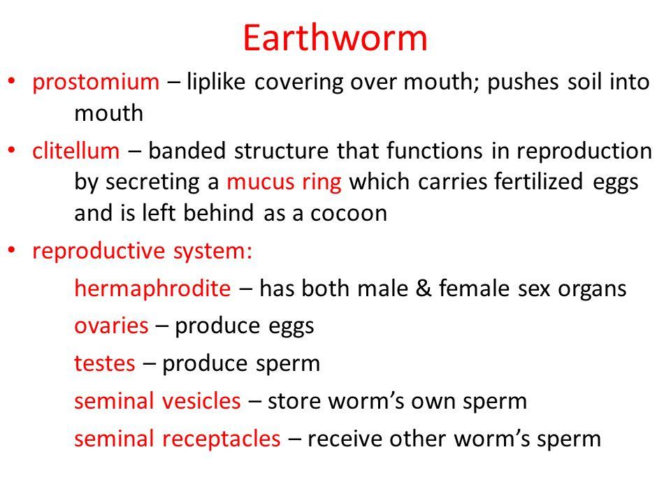 Kingdom Animalia Lower Invertebrates. Characteristics: eukaryotic ...