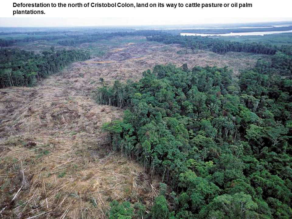 Deforestation to the north of Cristobol Colon, land on its way to cattle pasture or oil palm plantations.