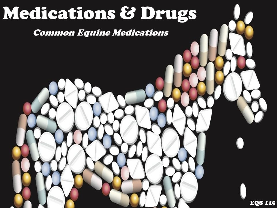 Medications & Drugs EQS 115 Common Equine Medications  - ppt download