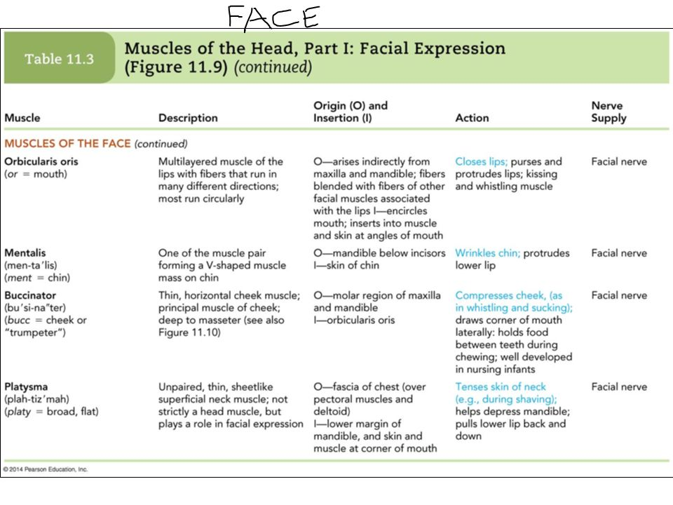 Apologise, Action of facial muscles