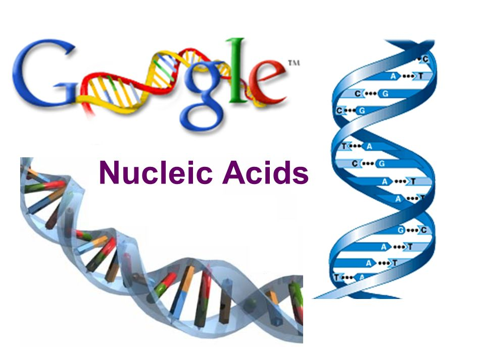 Nucleic acids | functions of nucleic acids | examples of nucleic.