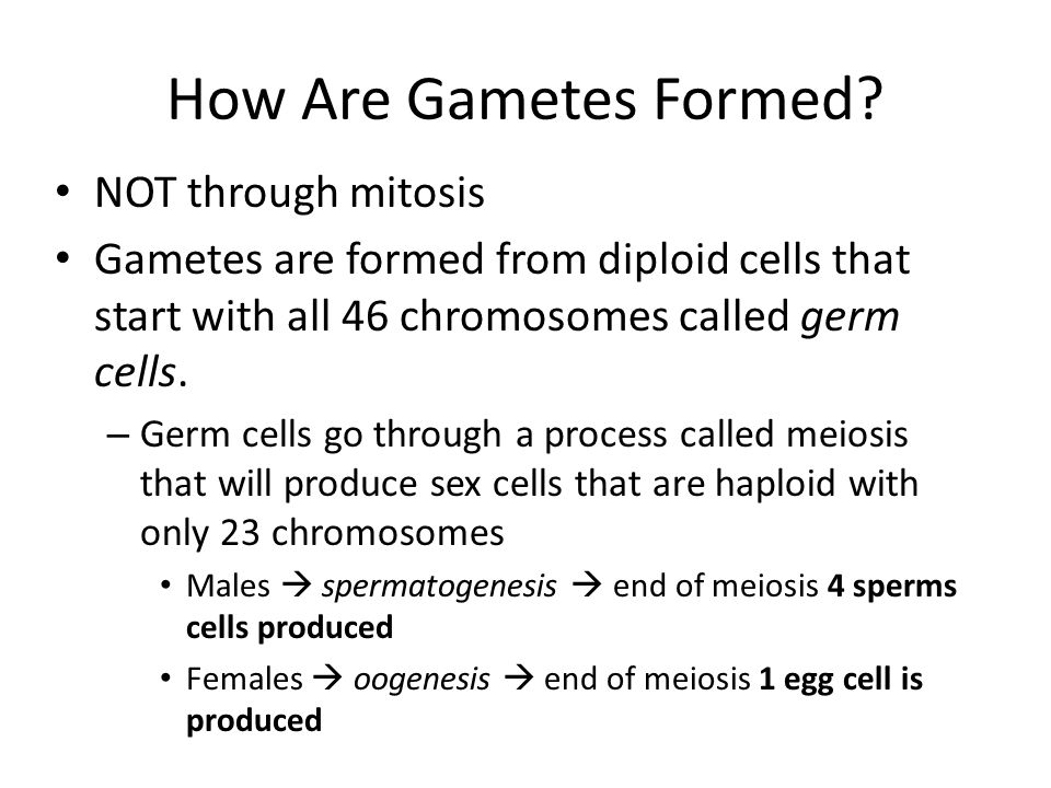 Fertilization Fertilization – process by which one haploid gamete (n) combines with another haploid gamete (n) to form offspring.