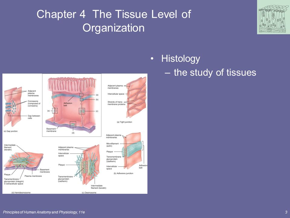 Principles of Human Anatomy and Physiology, 11e1 Chapter 4 The ...