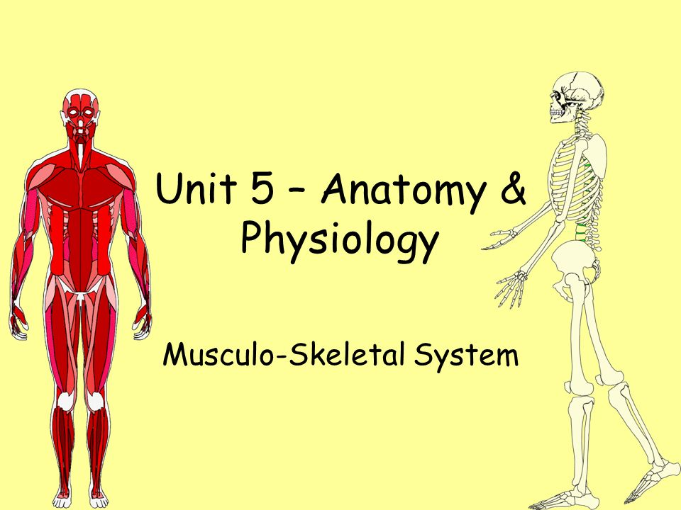 Unit 5 – Anatomy & Physiology Musculo-Skeletal System. - ppt download