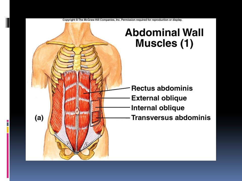 Muscles Recap Agonist and Antagonist  When one muscle is working ...