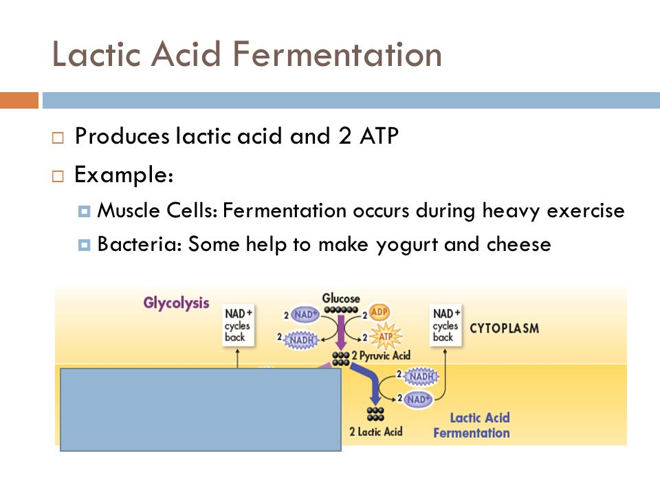Cellular Respiration Chapter 9 Review What Is The Equation For