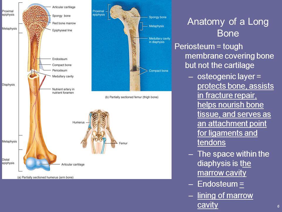 Anatomy Of Bone Tissue Images - human body anatomy
