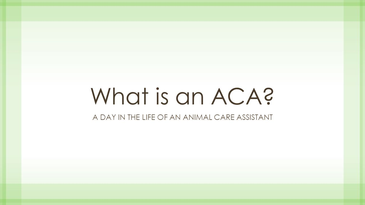 What is an ACA? A DAY IN THE LIFE OF AN ANIMAL CARE ASSISTANT  - ppt