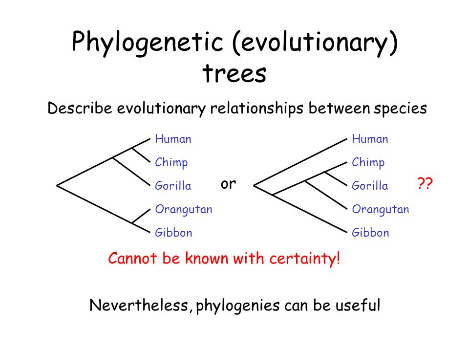 relationship between trees and humans
