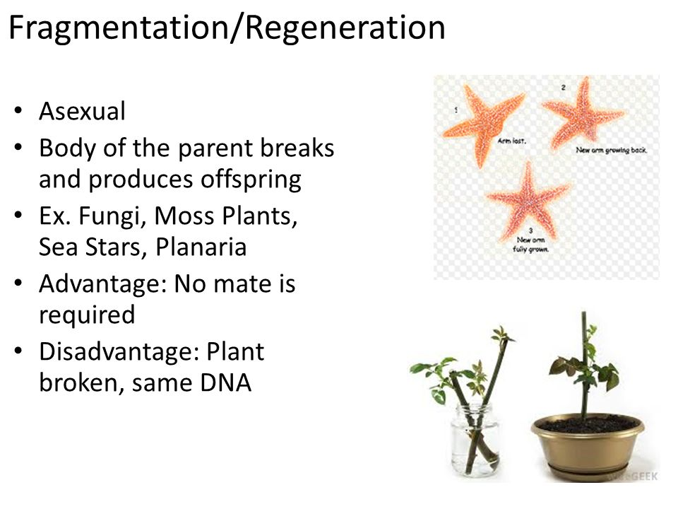 Asexual reproduction plants disadvantages of nuclear