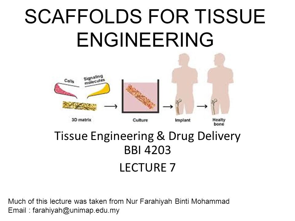 Scaffolds For Tissue Engineering Engineering Tissue Engineering Drug Delivery Bbi 4203 Lecture 7 Much Of This Lecture Was Taken From Nur Farahiyah Binti Ppt Download