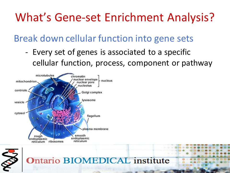 Functional Enrichment and Pathway Analysis – I Daniele