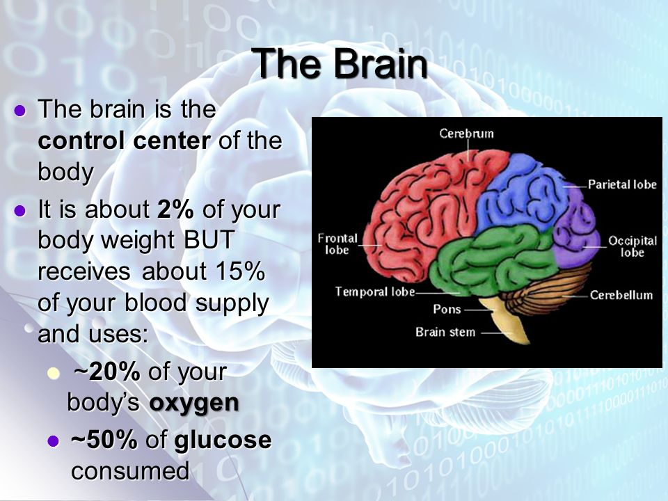 The Brain The Brain The brain is the control center of the body The brain is the control center of the body It is about 2% of your body weight BUT receives about 15% of your blood supply and uses: It is about 2% of your body weight BUT receives about 15% of your blood supply and uses: ~20% of your body's oxygen ~20% of your body's oxygen ~50% of glucose consumed ~50% of glucose consumed