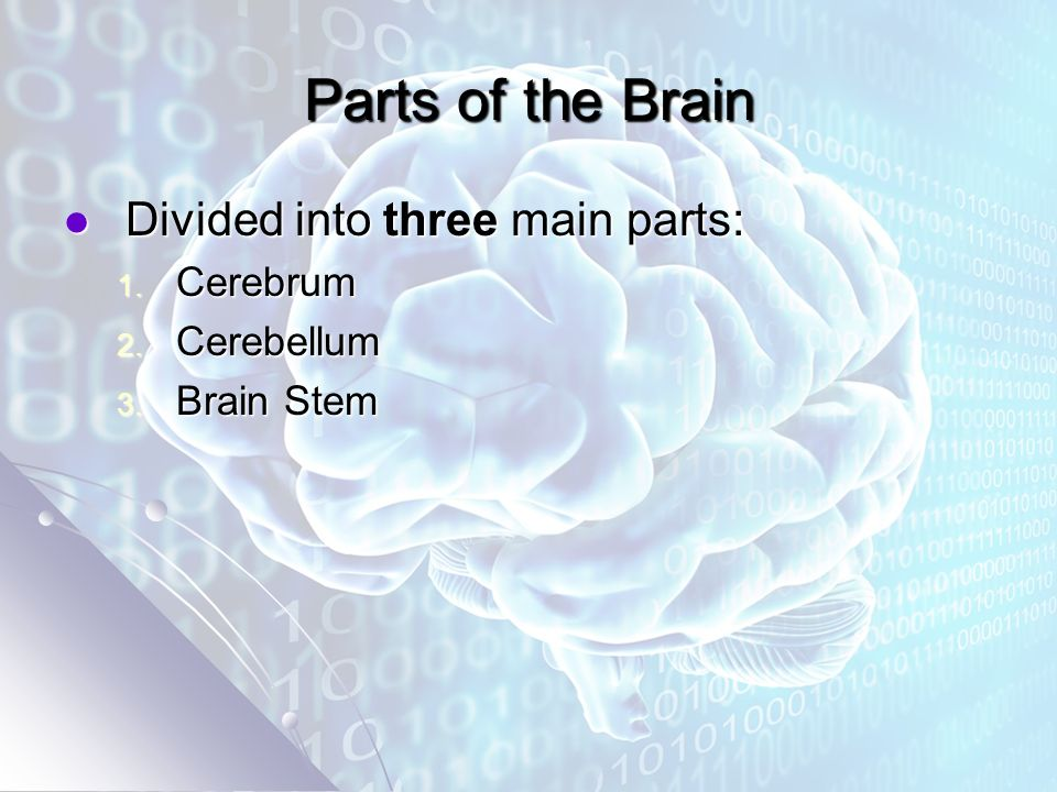 Parts of the Brain Divided into three main parts: Divided into three main parts: 1.