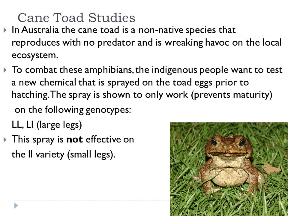 Final Spring Multiple Choice Review Cane Toad Studies In