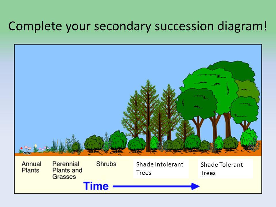 slide_11 ecosystem types part 1 ecological succession patterns \u201cto do