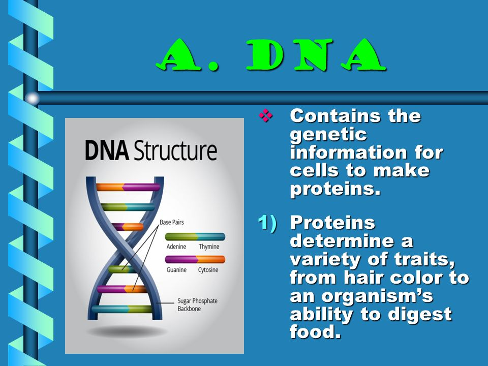 Dna The Code Of Life A Dna Contains The Genetic Information