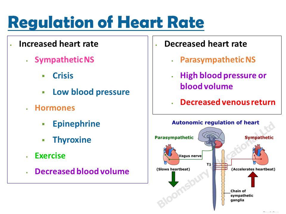 diazepam decreased heart rate