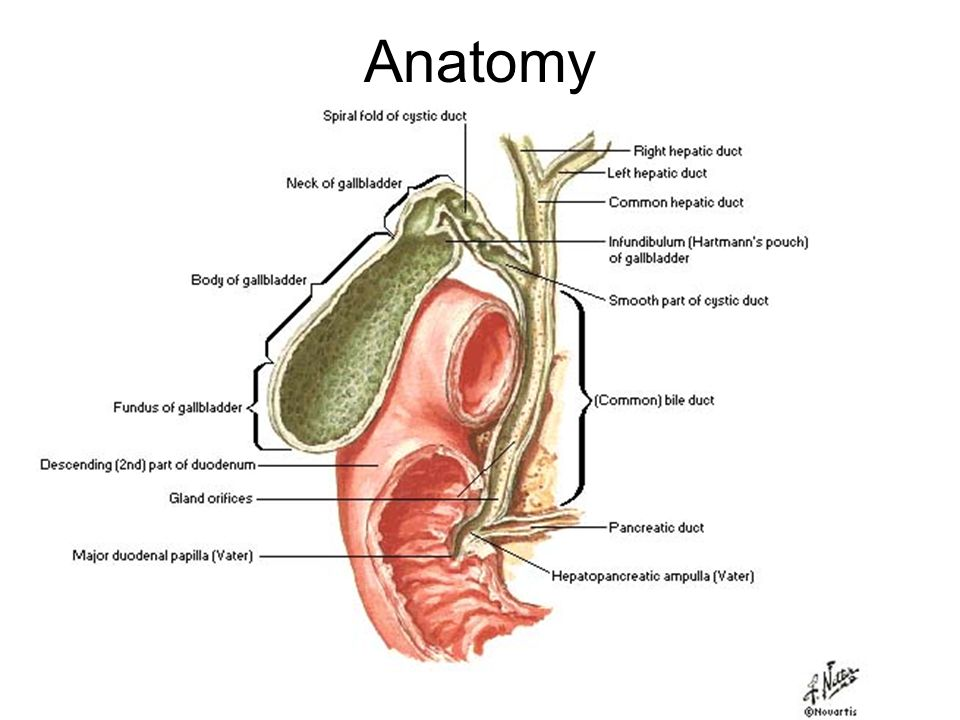 Tumors Of The Biliary System Anatomy Gallbladder Cancer Usually