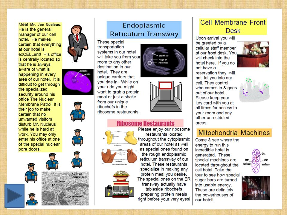 Organisms Macro To Micro Cell Project Ppt Video Online Download