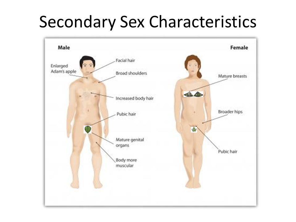 Primary secondary sexual characteristics