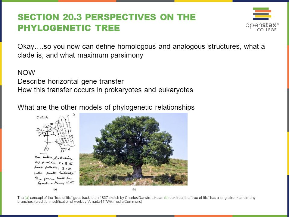 BIOLOGY 2 Chapter 20 PHYLOGENIES AND THE HISTORY OF LIFE