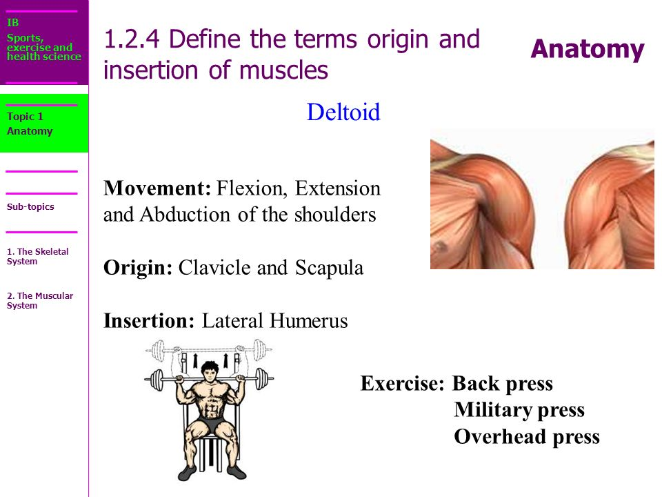 IB Sports, exercise and health science Sub-topics Anatomy Starter ...