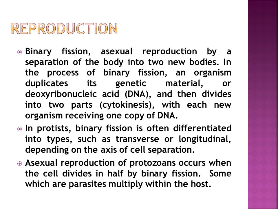 Coelenterates asexual reproduction fission