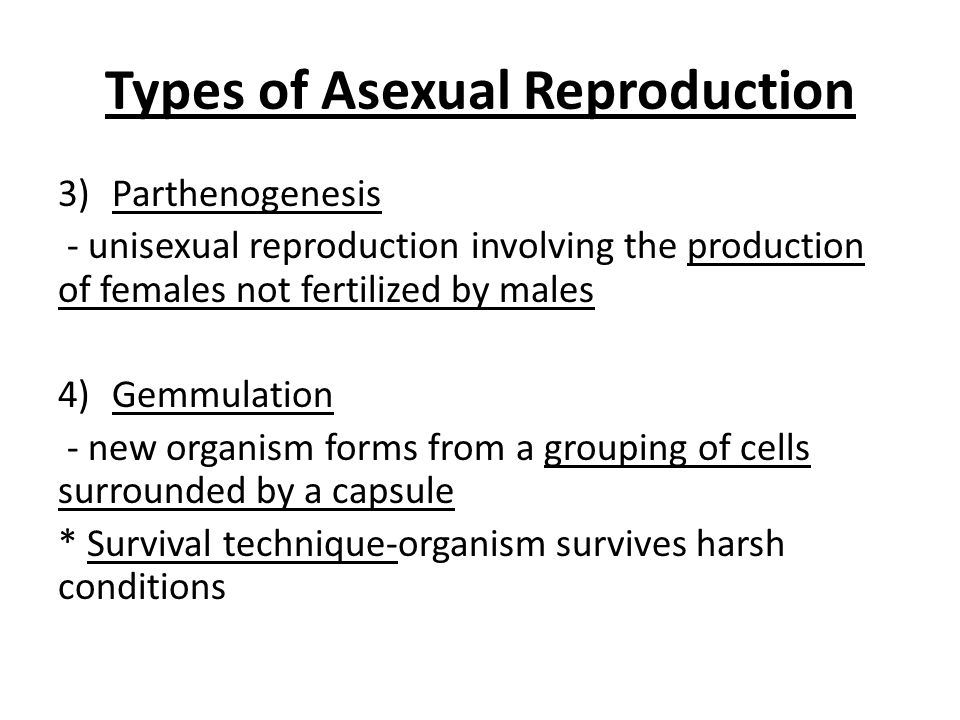 Gemmulation asexual reproduction examples