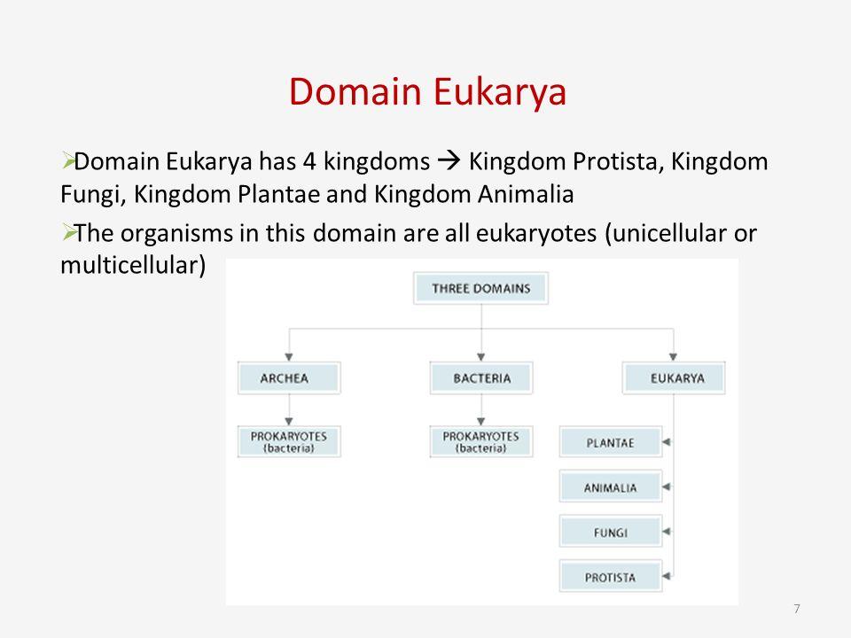 7 Domain Eukarya 7  Ef 83 98 Domain Eukarya Has 4 Kingdoms  Ef 83 A0 Kingdom Protista Kingdom Fungi Kingdom Plantae And Kingdom Animalia  Ef 83 98 The Organisms In This Domain