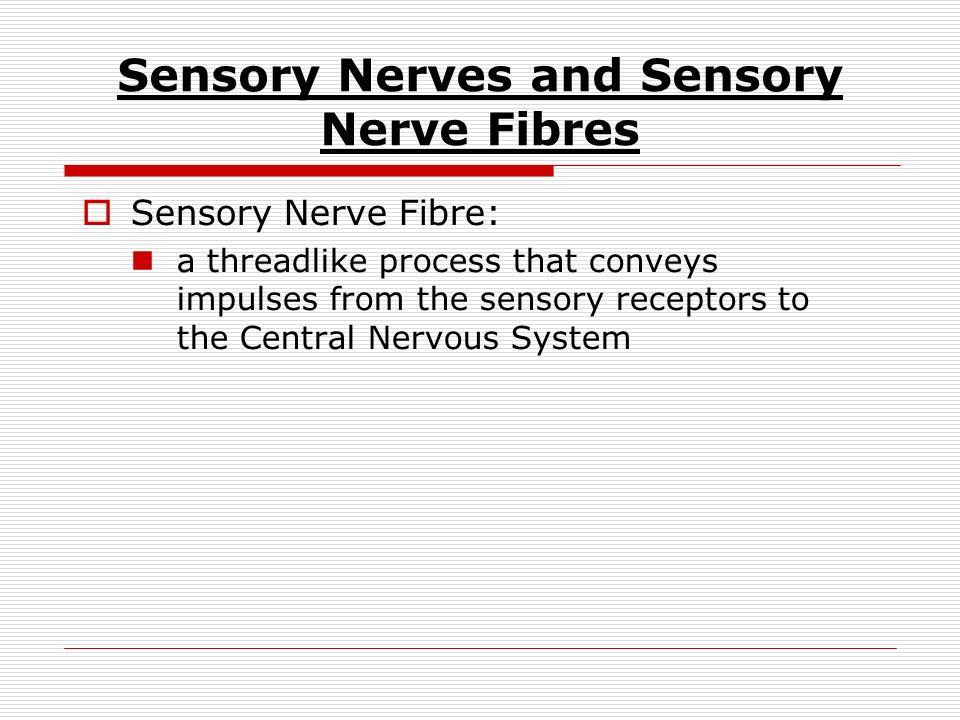 Objectives Define Sensory Nerve Fibre Outline The Various