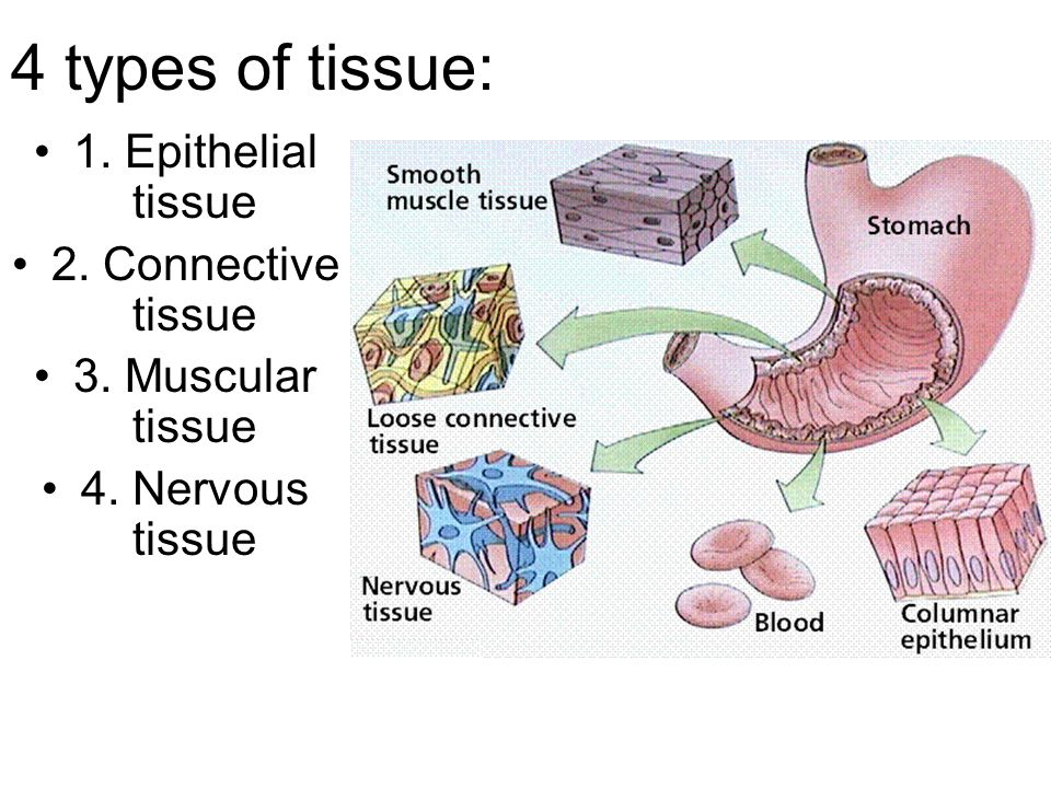 Anatomy Physiology. Remember cells with similar functions combined ...