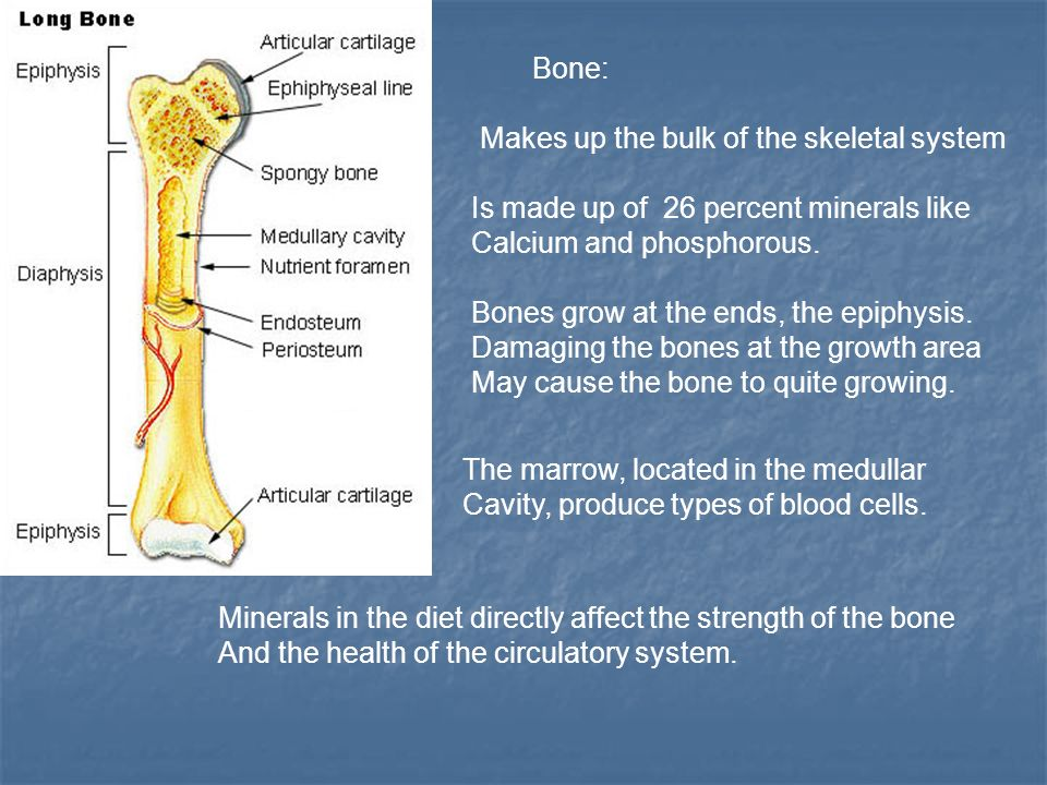 Unit 26 Agriscience Animal anatomy, physiology, and Nutrition. - ppt ...