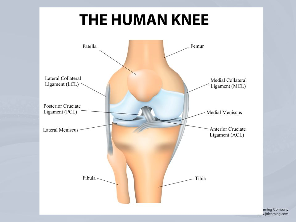 Chapter 15 Injuries To The Thigh Leg And Knee Bony Anatomy Bones