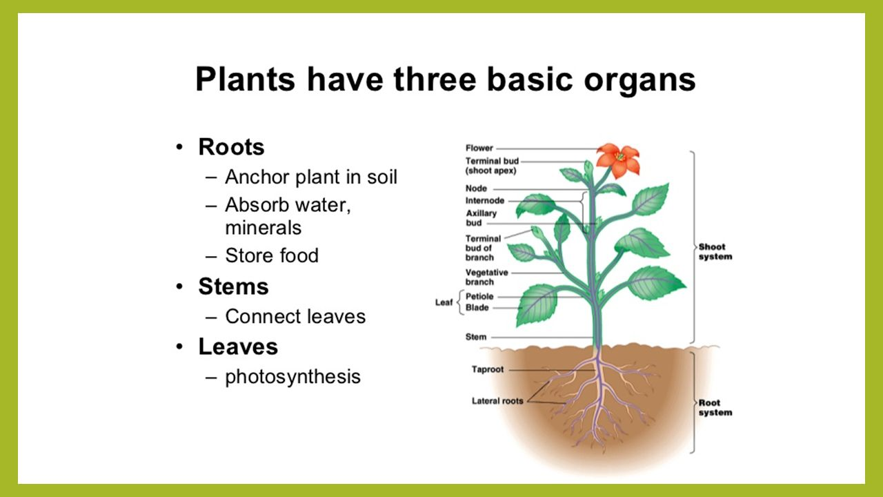 Bellringer What parts of plants can you name? What processes