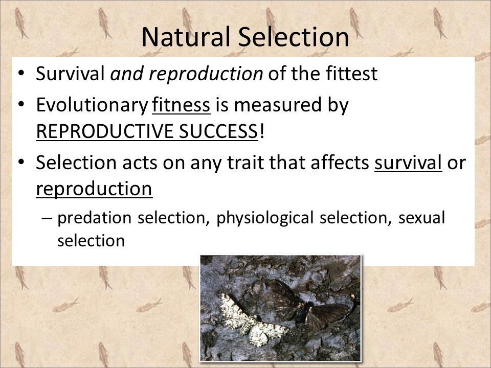 Why is sexual selection considered an evolutionary force