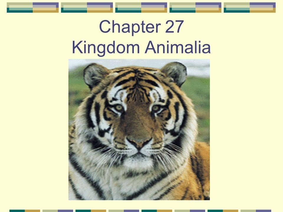 Image of: Invertebrata Chapter 27 Kingdom Animalia Slideplayer Chapter 27 Kingdom Animalia Kingdom Animalia Animals Are Unique