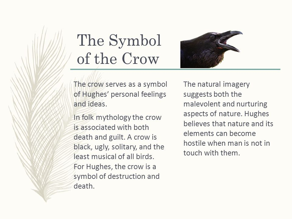 The Crow By Ted Hughes The Farms Are Oozing Craters In Sheer Sides