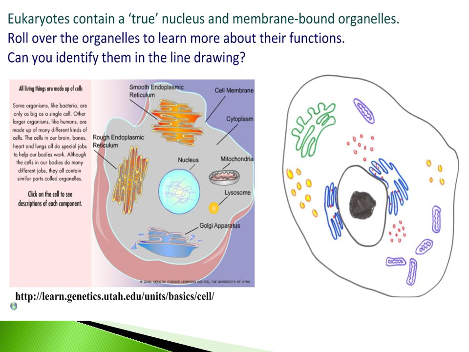 22 prokaryotic cells smooth pencil lines ruled label lines 19 ccuart Choice Image