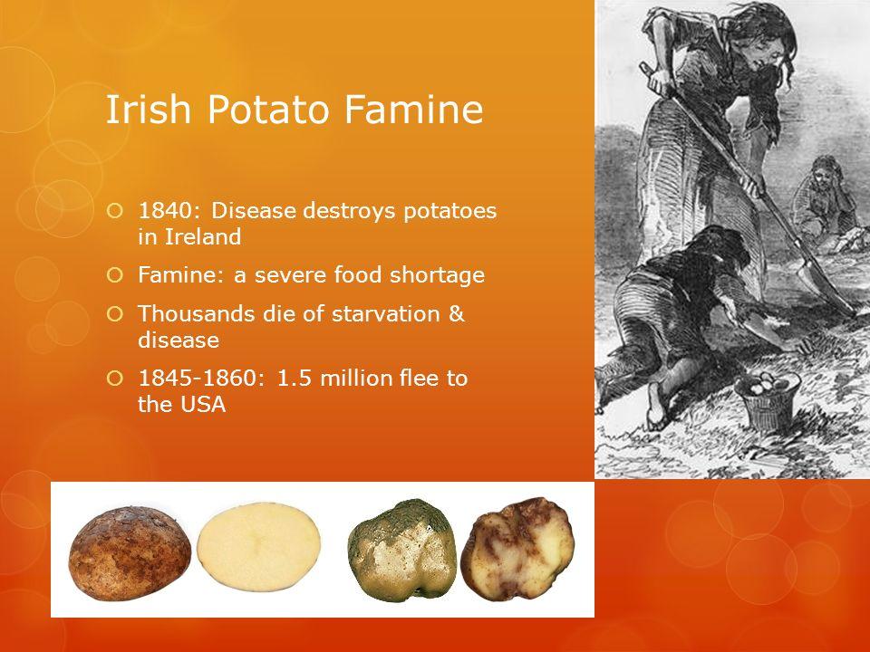 irish potato famine coursework