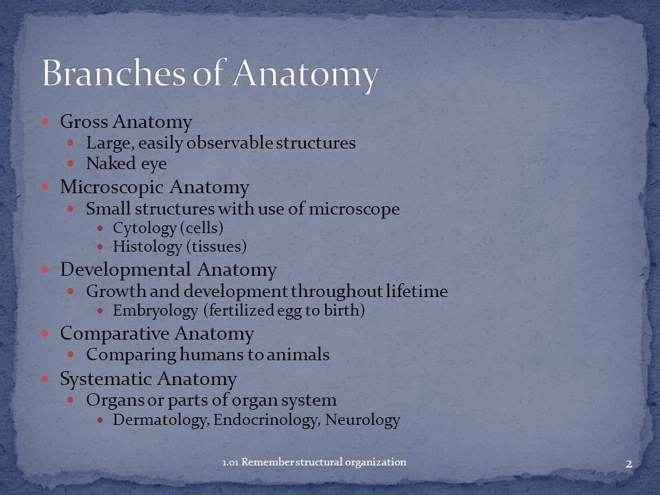 Biology ( large branch of science) Study of all forms of life ...