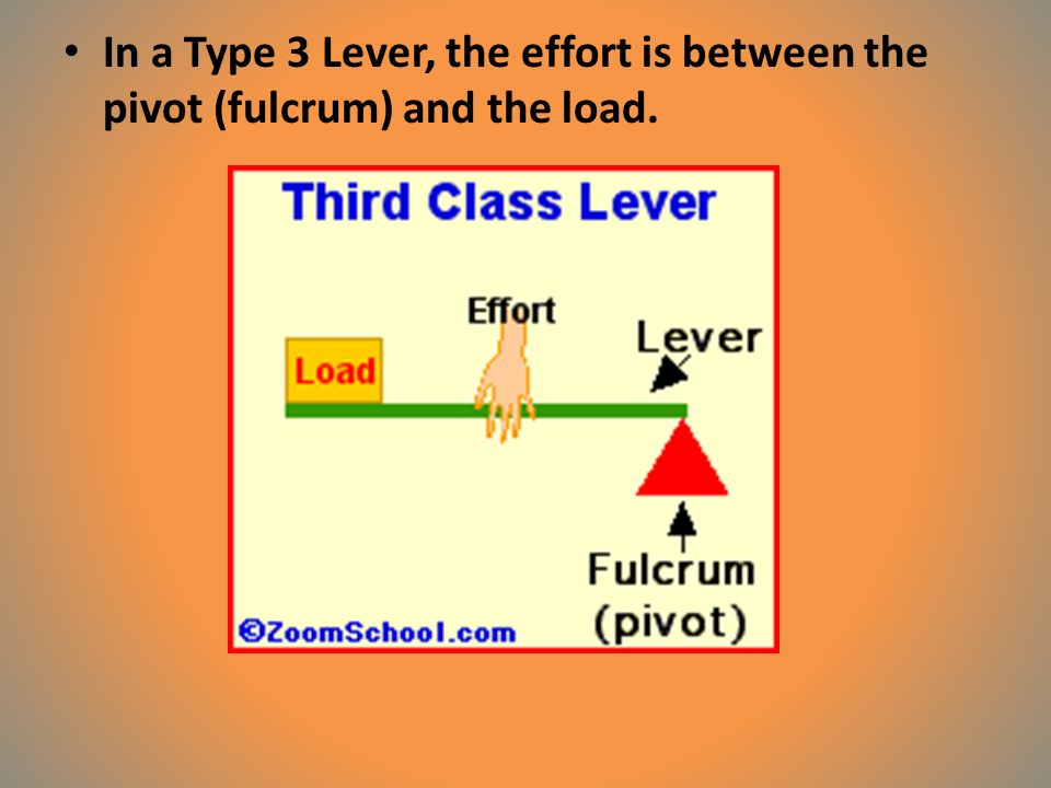 In a Type 3 Lever, the effort is between the pivot (fulcrum) and the load.