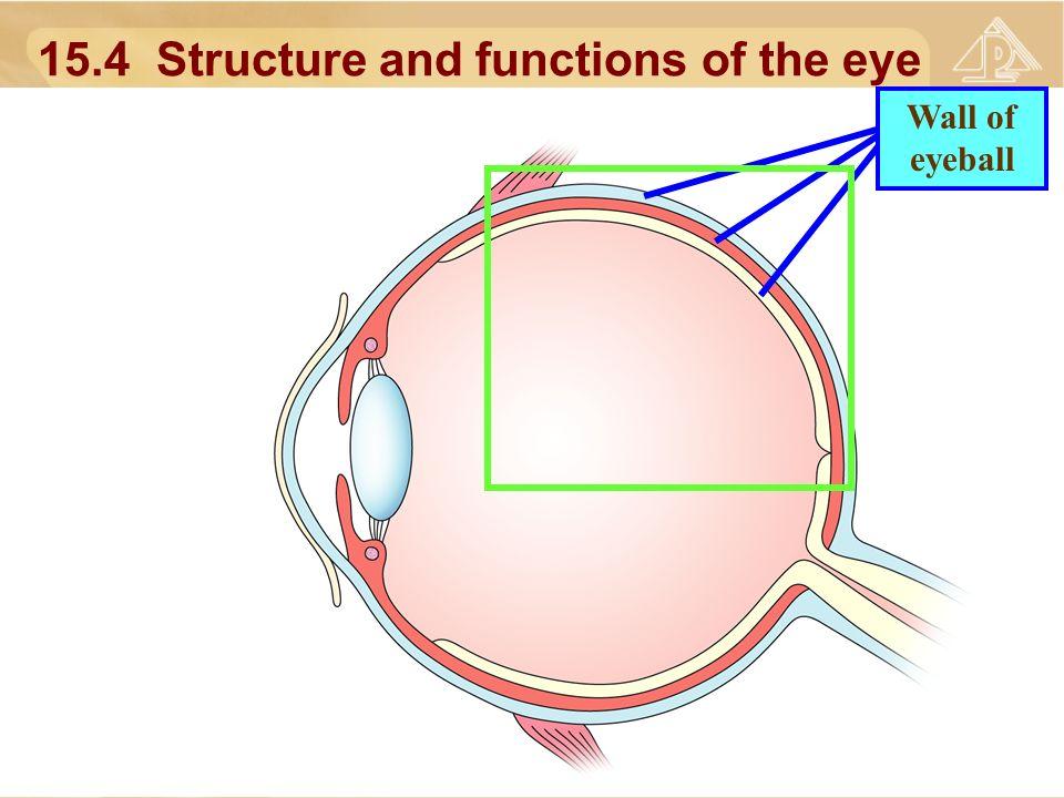 15.1 Irritability 15.2 The five senses 15.3 The eye 15.4 Structure ...
