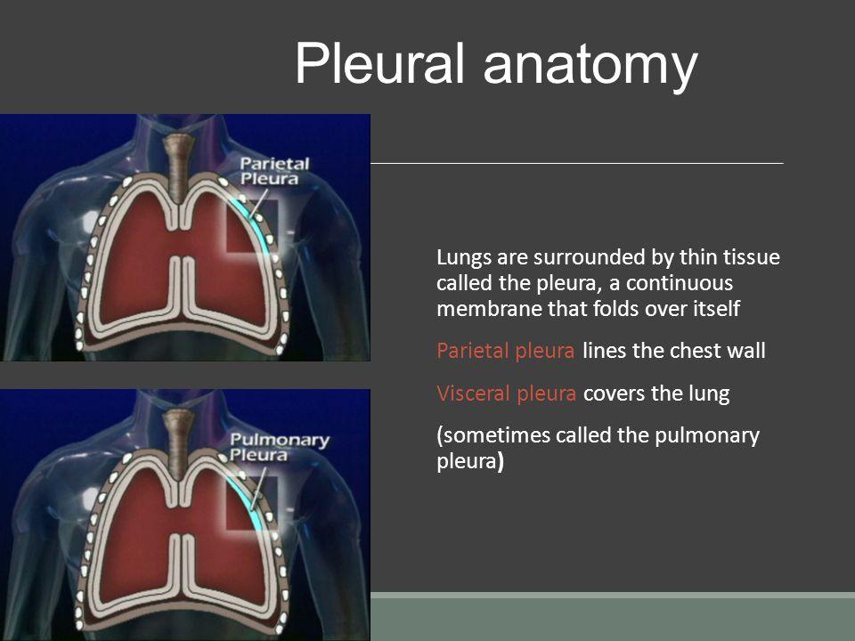 Chest Tube Management NUR 171. Objectives 1.Describe anatomy ...