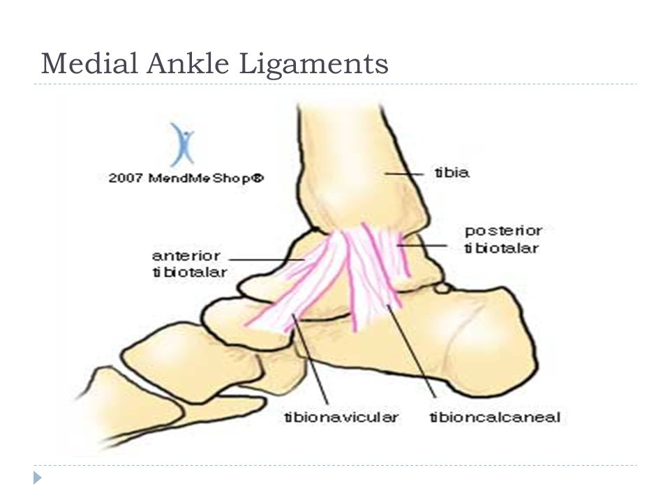 Injuries To The Lower Leg Ankle And Foot Anatomy Provide