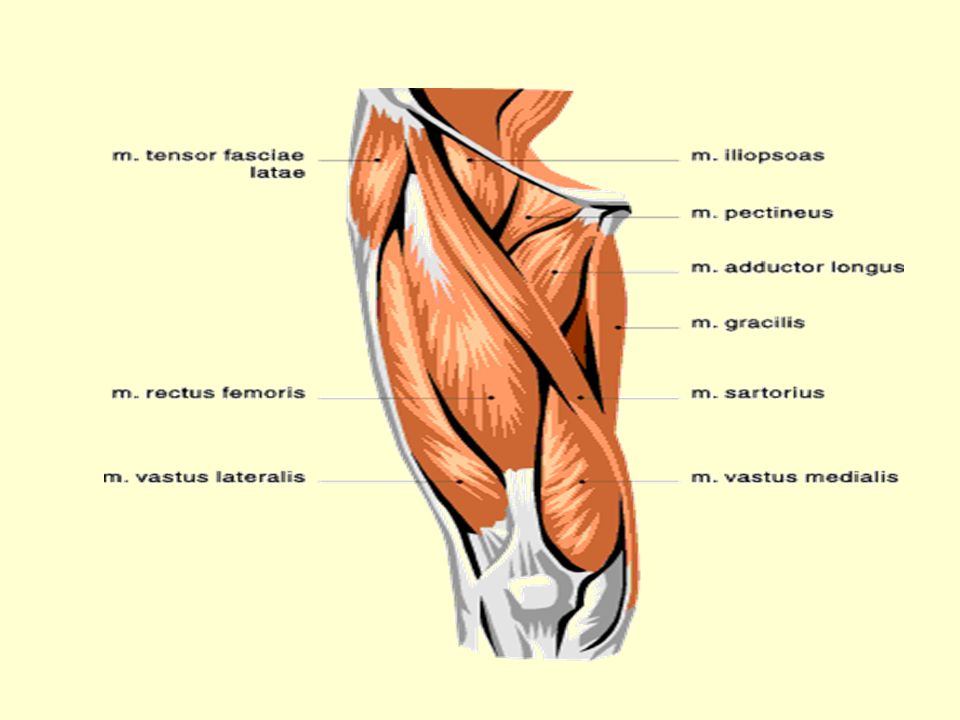 Injuries To Pelvis And Hip Ppt Download