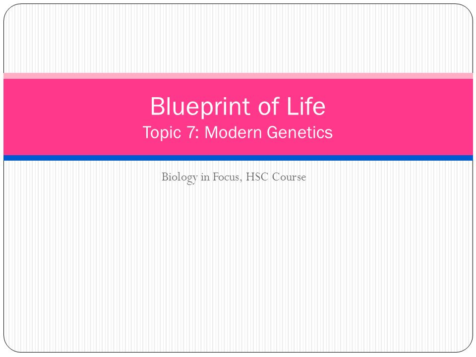 Biology in focus hsc course blueprint of life topic 7 modern 1 biology in focus hsc course blueprint of life topic 7 modern genetics malvernweather Gallery