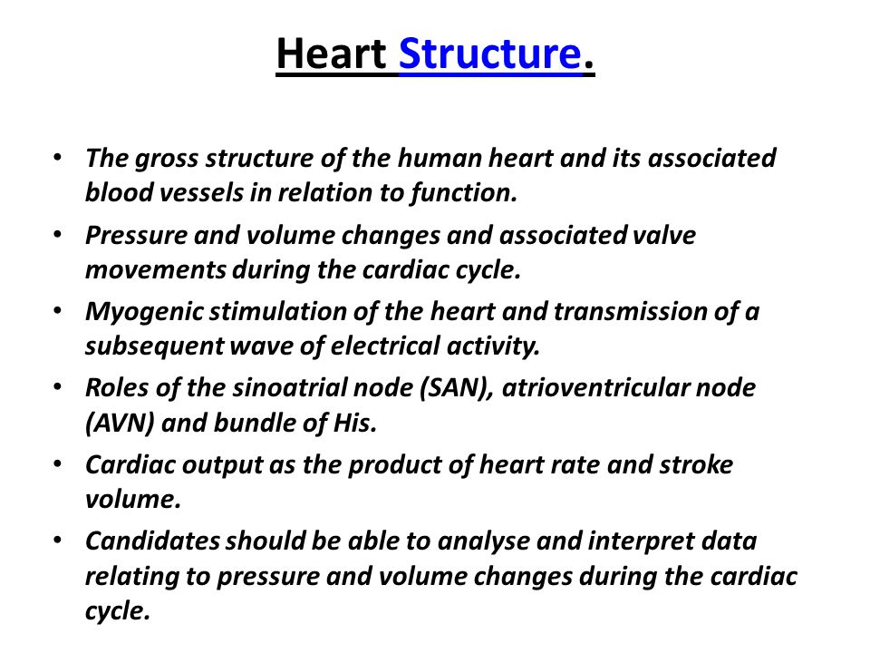 Heart Structure And Function The Gross Structure Of The Human Heart